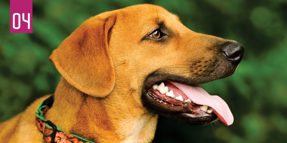 Dogs Dental Care products in UK